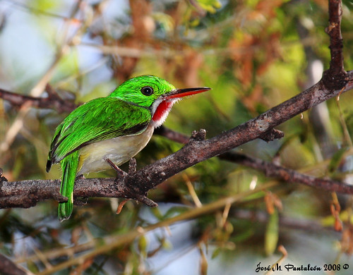 See a gallery of endemic Hispaniola birds