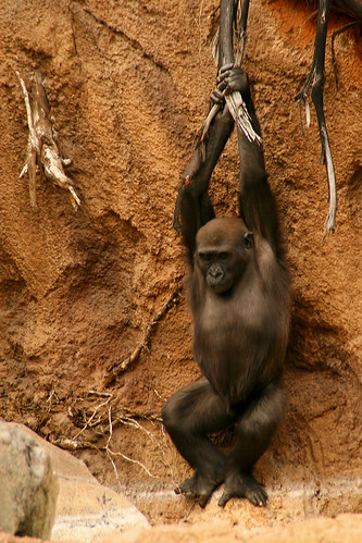 Glenda ... Just Hangin' Around