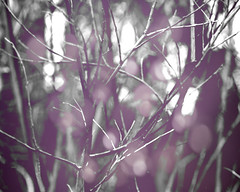 purple winter (Sweet Carolina Photography) Tags: winter light tree canon dark purple bare limbs makelightreal