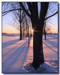 Sunrise Shadows (Lisa-S) Tags: trees winter snow ontario canada rural sunrise canon landscape shadows lisas explore contrejour allrightsreserved sunflare invited tistheseason caledon naturesfinest blueribbonwinner 3404 50d canon50d colorphotoaward theunforgettablepictures proudshopper magicdonkeysbest tisexcellence mdtbmasterpiece getty2009 copyrightlisastokes getty20091008