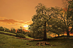 Cumberland Colour (DDA / Deljen Digital Art) Tags: uk trees sunset summer england cloud colour green nature field photoshop landscape holidays digitalart memories imagination layers photographicart cumberland imaginative layered notchristmas