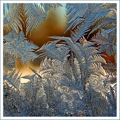 Fern of ice (marika_te) Tags: latvia latvian iceflower naturesfinest iceflowers marikate mywinners aplusphoto leduspues magicunicornverybest leduspue