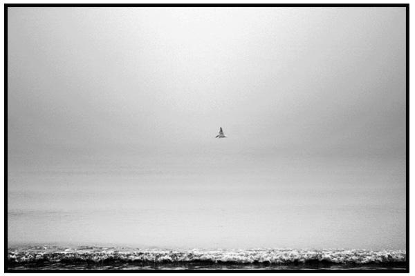 fagel-på-stranden