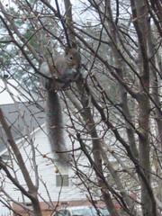 Squirrel up in the tree out back