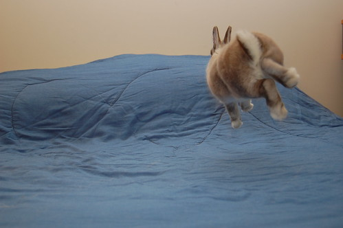 Bunny in Flight Rabbit