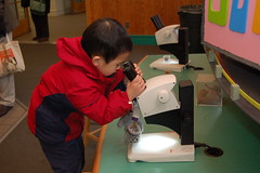 Peering through the microscope at cones and seeds