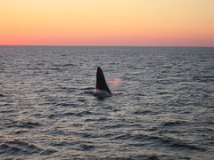 sunset nature boston massachusetts whale
