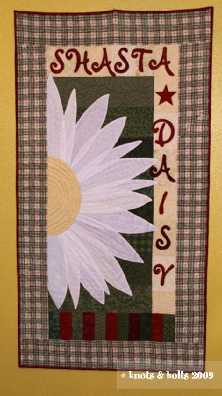 shasta-daisy