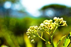 polen verd