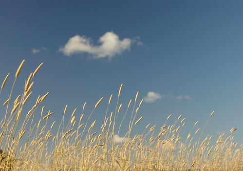 Brown Grass - by Michael Scott