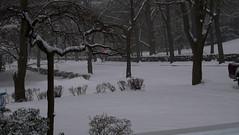 Snow Storm - Jan 10 & 11