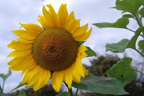 你拍攝的 20090101東吳童軍團_桃園北湖農場Nikon110.jpg。
