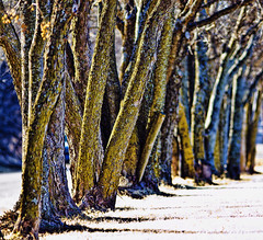 Tree Line (hz536n/George Thomas) Tags: trees smrgsbord kartpostal 2009cs3oklahomawintercanon30dstillwater topaz2009cs3oklahomawintercanon5dstillwater