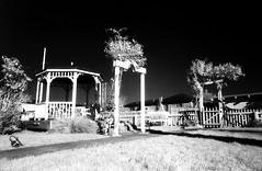 garden of the lady anne. (Bummer Nights) Tags: bw pentax k1000 victorian infrared arcata ilford hoya sfx testroll r72 handdevelopedprinted 012809