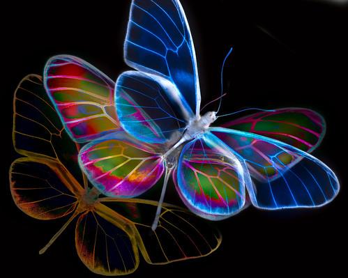 Wings of Man