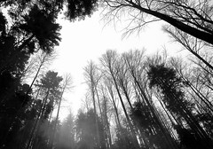 no tomorrow (gato-gato-gato) Tags: trees bw white mist black cold nature fog forest schweiz switzerland interestingness woods nebel suisse natur foggy zug explore kalt wald weiss bume baum schwarz zugerberg blairwitchproject flickrexplore neblig zugo explored tokina1224mmf40 canoneos400d gatogatogato gatogatogatoch