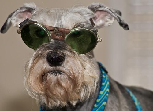 Goofy Goggles ~ 5/52