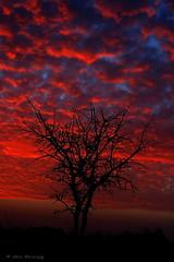 Tree Silhouette 7 (Avi Morag) Tags: sunset tree silhouette clouds israel redsky  soe blueribbonwinner flickrsbest mywinners theunforgettablepictures overtheexcellence 100commentgroup dragondaggerawards avimorag