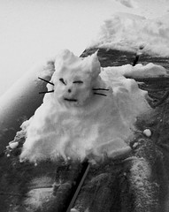 Snow Cat von Mr. Ducke