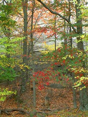 Delicate Autumn Scenery (Stanley Zimny (Thank You for 14 Million views)) Tags: park autumn trees red tree green fall nature colors leaves yellow automne catchycolors leaf scenery colorful colours seasons natural fallcolors autumncolors fourseasons delicate autumnal colorexplosion 4seasons