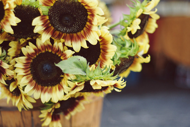 Bucket of Sunflowers @ the Farmer's Market