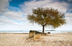 Colonia Beach (Jim Boud) Tags: wood travel seascape beach southamerica water leaves clouds river landscape uruguay islands pier vanishingpoint leaf sticks sand patterns branches wideangle delta colonia twigs daytrip lightroom artisticphotography riodelaplata coloniadelsacramento jimboud canoneos60d jamesboud canonefs1585mmf3556isusm canon1585mm
