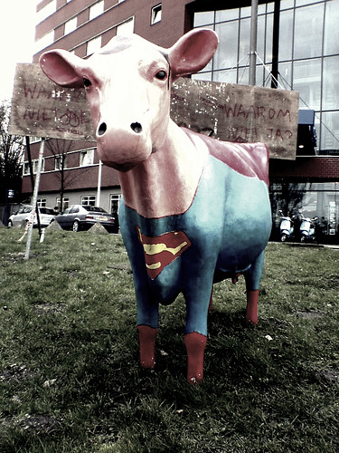 SuperCow!