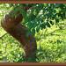 Snaking tree