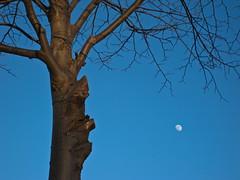 Sunset tree (Hkan Dahlstrm) Tags: blue moon tree sol azul del soleil skne twilight zonsondergang blauw tramonto sonnenuntergang sundown sweden dusk blu schweden coucher du bleu sverige blau puesta bl   svezia ramlsa