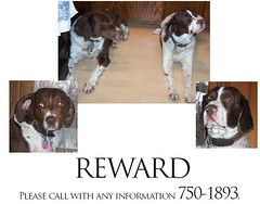 Two Dogs Missing