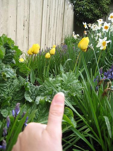 Green Thumb?