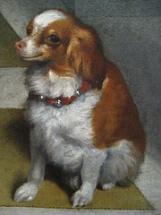 Small-Headed Dog