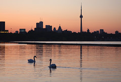 Toronto in the Morning Light (Little Ms Laura) Tags: grandma toronto bird animal skyline sunrise canon swan wildlife thumbsup dslr scape sillhouette bigmomma 40d challengeyouwinner 3waychallengewinner platinumphoto allrightsreserved photofaceoffwinner photofaceoffplatinum thechallengegame thechallengegroup challengegamewinner 70300mmf456dlmacrosuper pfogold photobug1sphoto ostrellina friendlychallengewinner thumbsupwinner tmoacawardwinner tmoacgrandmaawardwinner oct08pfobrackets herowinner ultraherowinner thepinnaclehof tphofweek38