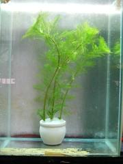 Thủy Sinh Tuấn Anh-Chuyên cây & Rêu Thủy Sinh, Cá Cảnh Biền & Hồ Cá Cảnh Biển - 43