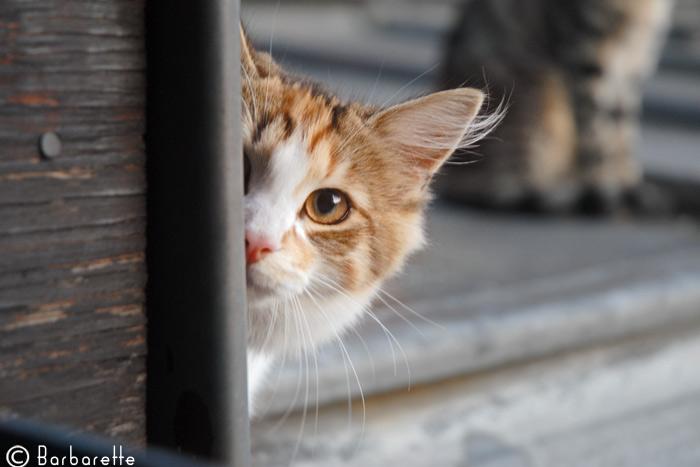 cat's-commando6