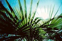 (black_siren) Tags: sun film vancouver palms xprocess shadows kodak falsecreek ektachrome e100vs vandigicam trashcam vivitarultrawideandslim