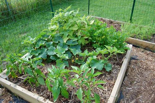 Garden 070608-01