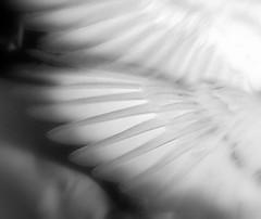 Angels (rr_rocketman) Tags: bird minnesota birds angel wings nikond50 angels artisticexpression 123nature beautifulcapture aplusphoto heartawards naturewatcher happinessconservancy