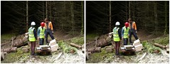 Weighing the flitches (Dan (aka firrs)) Tags: wood uk trees forest scotland stereoscopic 3d crosseye forestry timber logging science stereo research scales stereopair weighing harvesting sirt crossview napieruniversity centrefortimberengineering flitches