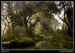 ~Come To The Land Of Fairy~ (A y A n) Tags: morning light sun india west green nature water beautiful