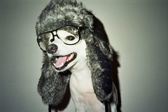 Richie (Mitzicardo) (987319) Tags: dog white film glasses richie furhat mitzicardo chiclefreakoftheweekoctober6november212008