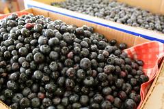 Blueberries 2008 - 03