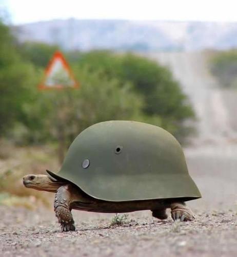 armyturtle