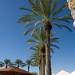 Scottsdale Palms