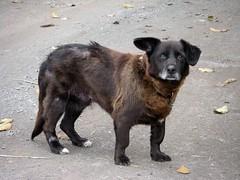 Sad Dogs Say So Much (Leighgion) Tags: fauna casio exv7