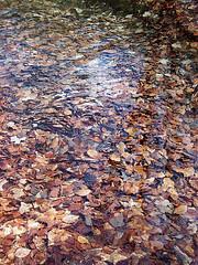 Il lago di foglie (Luigi_Rispoli) Tags: italy verde foglie alberi trekking lago natura poesia inverno autunno calma lazio marrone bosco ambiente frosinone ciociaria montiernici escursioni viconellazio luigirispoli lafotoèstatascattatasuimontiernici nelcomunediviconellaziofr nelmezzodellaciociaria