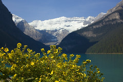 Lake Louise (sminky_pinky100 (In and Out)) Tags: flowers lake canada mountains yellow rockies alberta lakelouise banffnationalpark 5photosaday omot cans2s eyejewel personabest