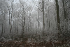Foggy day (Clare L H) Tags: wood trees winter mist cold ice blueribbonwinner bej golddragon mywinners abigfave platinumphoto anawesomeshot diamondclassphotographer theunforgettablepictures theunforgettablepicture theperfectphotographer goldstaraward