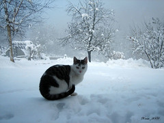 Winter is not cold for those with  warm memories... (Xena*best friend*) Tags: winter pet cats snow chats furry feline kitty kittens 1001nights katzen feral michaeld michaeldouglas canondigitalixus50 abigfave piedmontitaly platinumphoto anawesomeshot catsinthesnow citritbestofyours preciouspetpics newacademy goldstaraward natureselegantshots artofimages catsinwhitestuff