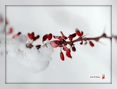 """Joy to the World"" (rodandnancy80538) Tags: christmas winter holiday snow cold nikon december joy carols blueribbonwinner d80 105vr aplusphoto"